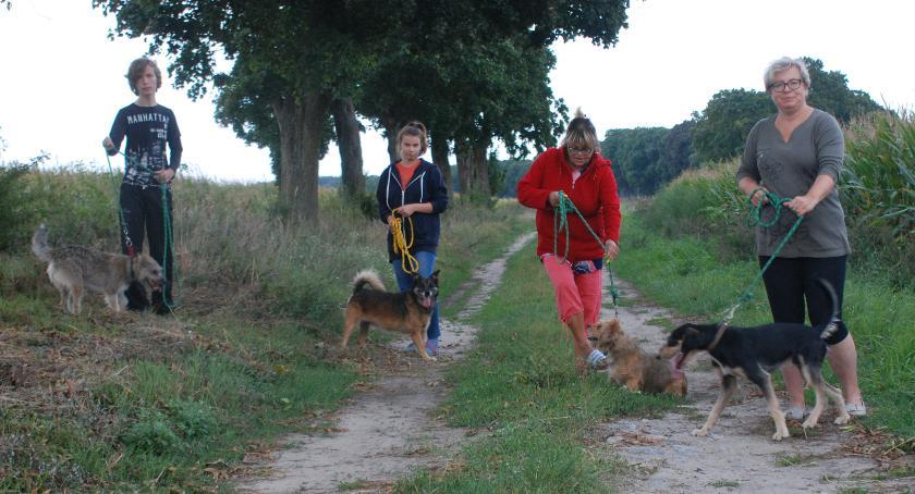 Piątkowy spacer z psiakami z przytuliska w Ferdynandowie. Katarzyna Korycka-Walasiak zachęca wszystkich zainteresowanych do przyłączenia się do tego typu akcji