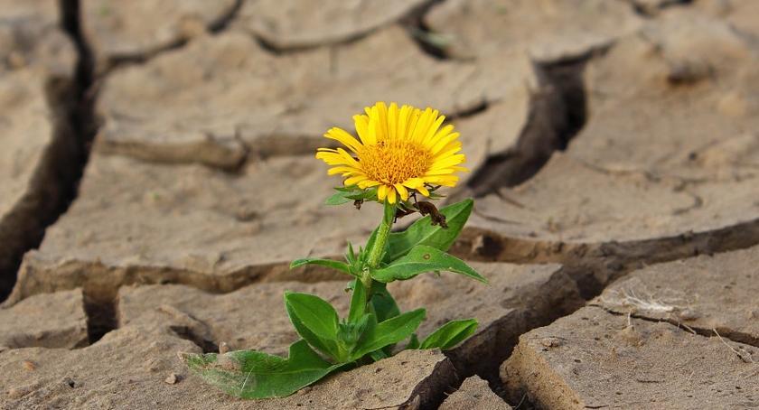 Rolnictwo, Klęska suszy rolniku złóż wniosek - zdjęcie, fotografia