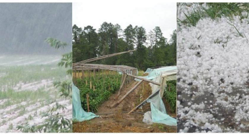 Rolnictwo, Pomoc rolników - zdjęcie, fotografia