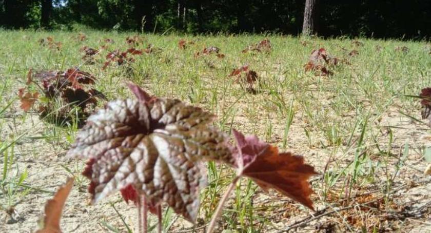 Kronika kryminalna, Ukradła rośliny usłyszała wyrok - zdjęcie, fotografia
