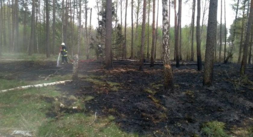 Straż pożarna, Ogień lesie - zdjęcie, fotografia