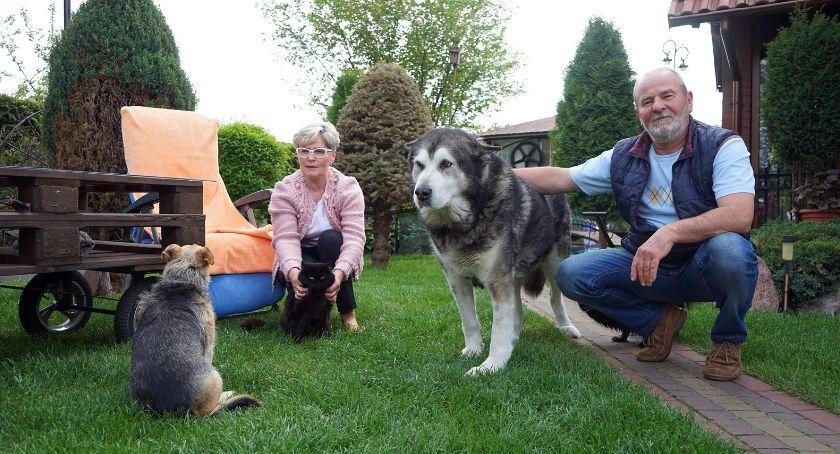 Zwierzęta, które kochamy, straży zwierząt - zdjęcie, fotografia