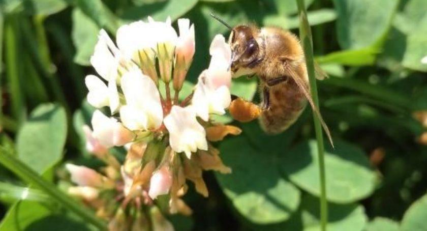 Interwencje czytelników, warta praca pszczoły - zdjęcie, fotografia