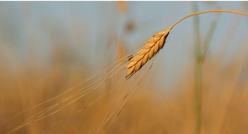 Rolnictwo, Rolniku ważne - zdjęcie, fotografia