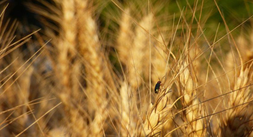 Rolnictwo, Uwaga rolnicy susza Jastrowiu - zdjęcie, fotografia