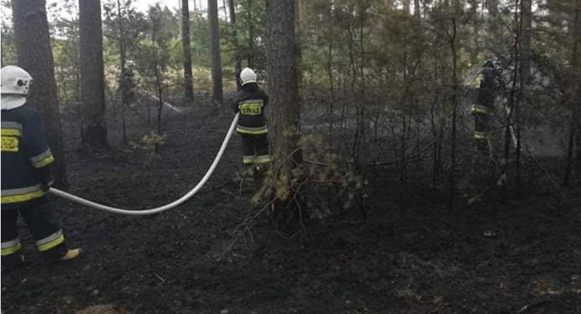 Straż pożarna, Pożar lesie - zdjęcie, fotografia