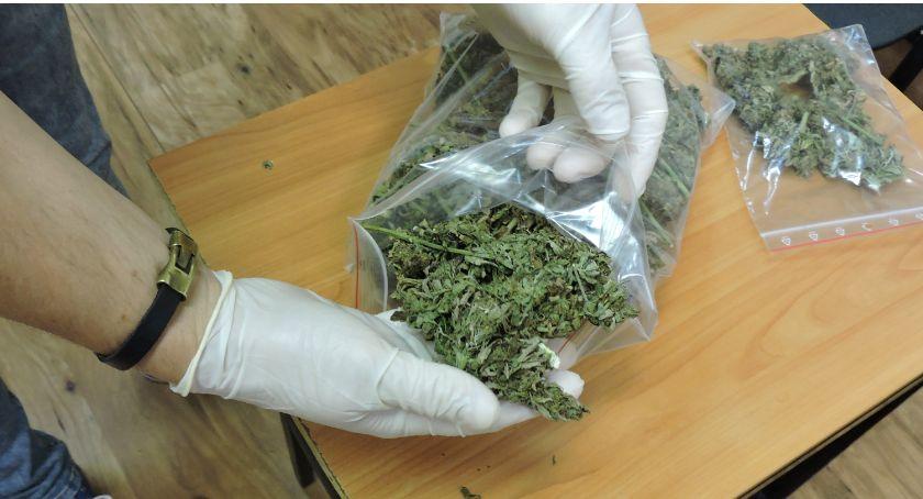 Kronika kryminalna, Zatrzymany marihuaną Złotowie - zdjęcie, fotografia
