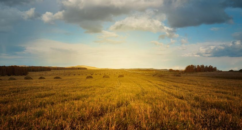 Rolnictwo, działa kalkulator kredytów rolników - zdjęcie, fotografia