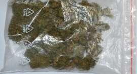 Odpowiedzą za posiadanie i uprawę marihuany