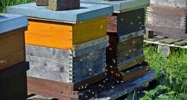 Pszczelarze z Okonka dostali 60 tys. zł dotacji
