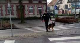 Pies służbowy w Straży Miejskiej w Złotowie [AKTUALIZACJA]