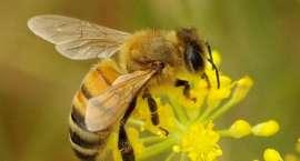Na pomoc pszczołom