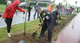 Powszechne sadzenie drzew pod hasłem