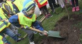 Kolejna akcja sadzenia drzew w Złotowie