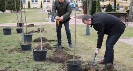 Akcja Drzewo dla Polski dotarła do Złotowa