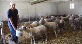 Full wypas: Owce w Starej Wiśniewce