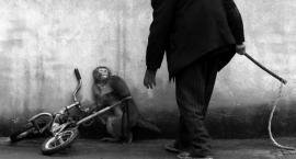 W Złotowie nie będzie cyrku ze zwierzętami