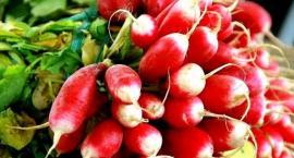 Problemy chorobowe warzyw