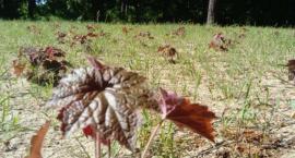 Ukradła rośliny - usłyszała wyrok