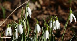 Wiosnę już widać