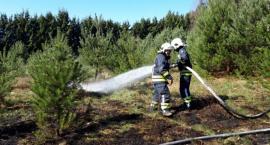 Pożar trawy i młodnika w Okonku