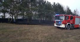 Pożar lasu i trawy w Jastrowiu