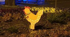 Kury i zające w Złotowie