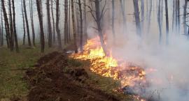 OSP Lotyń kontra pożar lasu