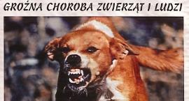 Szczepienie psów przeciw wściekliźnie w gminie Okonek