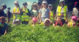 Dzieci z wizytą na farmie konopnej