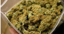 Przewoził pół kilograma marihuany
