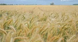 Nawet 70% strat w rolnictwie
