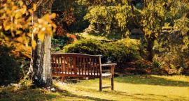 Jaką ławkę ogrodową wybrać? Podpowiadamy, na co warto zwrócić uwagę przy zakupie