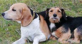 Uwaga! Znaleziono psy! (AKTUALIZACJA)