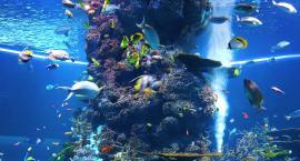 Jak wybrać dekoracje do akwarium?