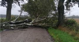 Strażacy usuwali skutki silnego wiatru w powiecie złotowskim