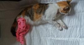 Kot postrzelony, sprawca nieznany