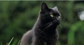Gmina Krajenka w trosce o psy i koty