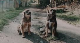 Poszukujemy Suzi i Dżesi