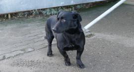 Szukamy właściciela lub nowego domu dla psa