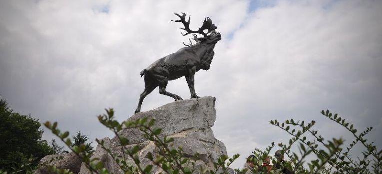 Relacje z odkryć, Beaumont Hamel Newfoundland Memorial - zdjęcie, fotografia