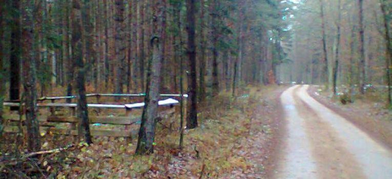 Relacje z odkryć, Żołnierska mogiła leśnej drodze - zdjęcie, fotografia