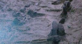 """Prace ekshumacyjne opisane w 40-tym  numerze biuletynu Rady Ochrony Pamięci Walk i Męczeństwa """""""