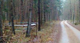 Żołnierska mogiła przy leśnej drodze.