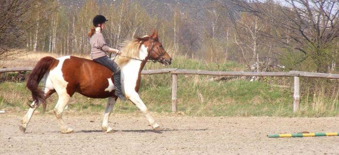 Jazda konna, Ćwiczenia siodle oklep - zdjęcie, fotografia