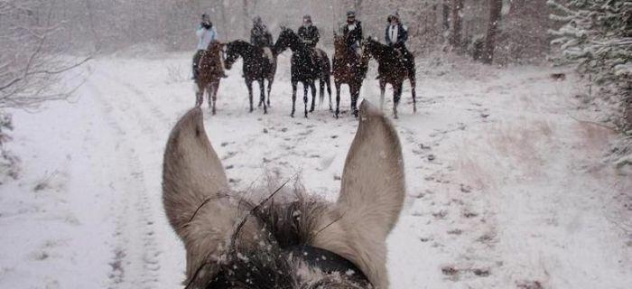 Obozy jeździeckie, Ferie siodle turnus - zdjęcie, fotografia