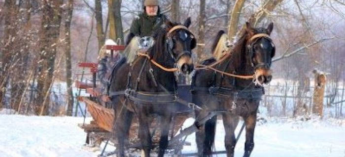 Ośrodki jeździeckie, Obozy konne Stajni - zdjęcie, fotografia