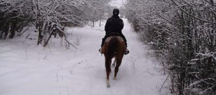 Jazda konna, Jazda konna zimą - zdjęcie, fotografia