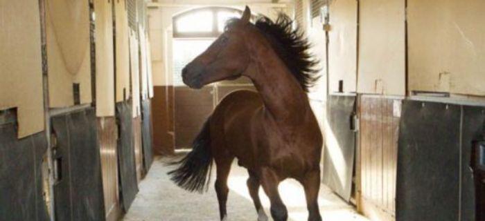Hodowla koni, Bezstajenna hodowla - zdjęcie, fotografia