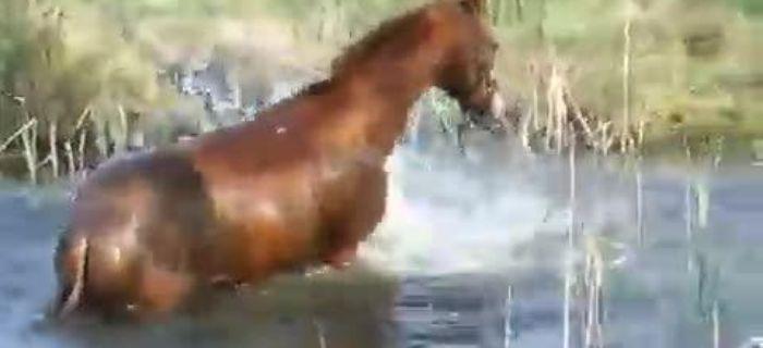 Hodowla koni, konia - zdjęcie, fotografia